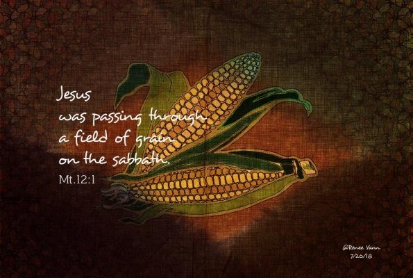 Mt12_1 corn