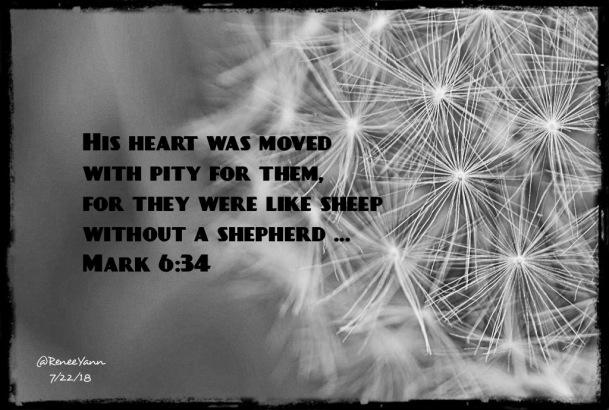 Mt6_34 shepherd