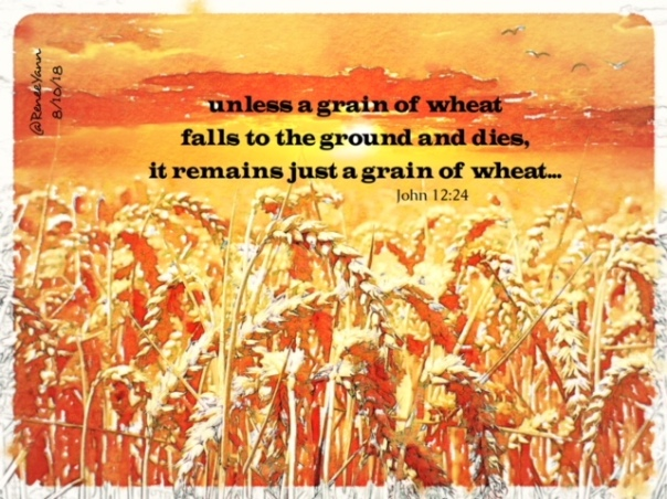 John 12_24 grain