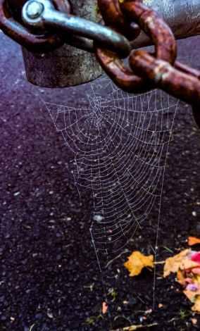 lock web