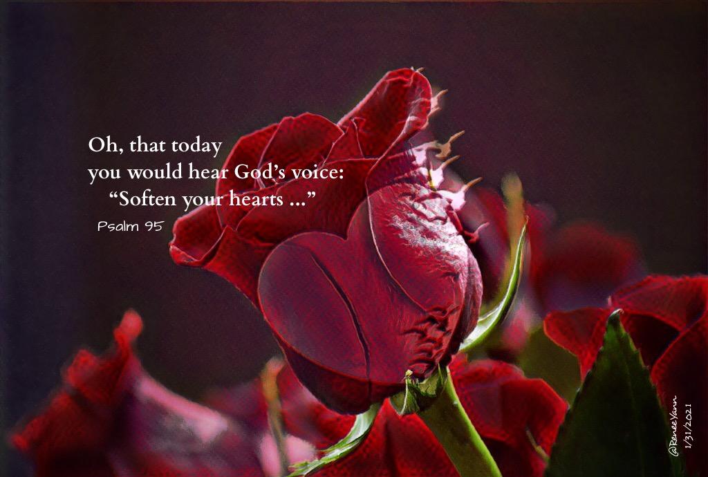 Lavish Mercy – God's Mercy is everywhere and infinite.